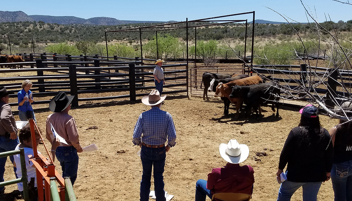 people on a ranch