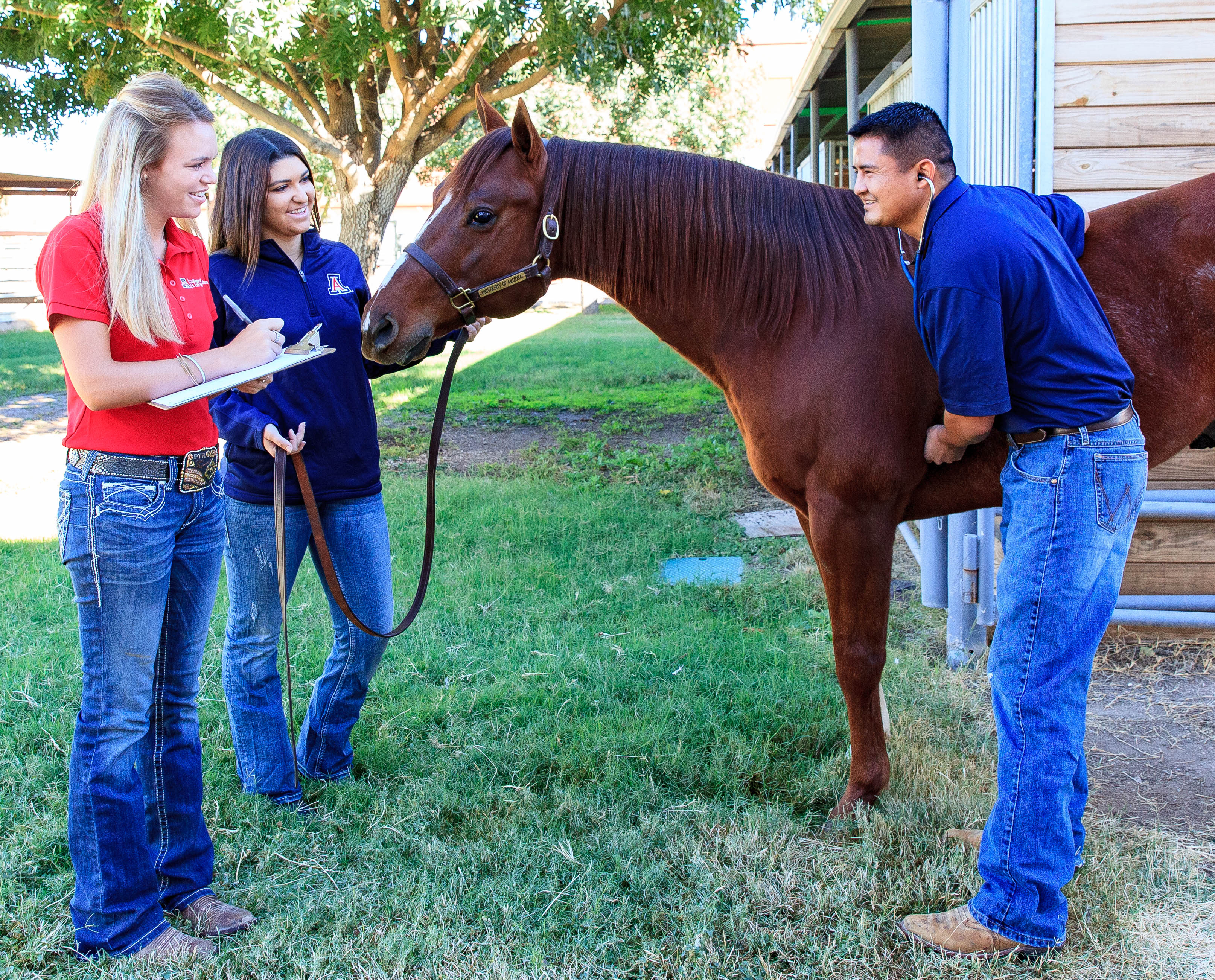 Students recording vital signs of horse